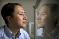 In this Oct. 10, 2018 file photo, He Jiankui is reflected in a glass panel as he works at a computer at a laboratory in Shenzhen in southern China's Guangdong province. (AP Photo/Mark Schiefelbein)