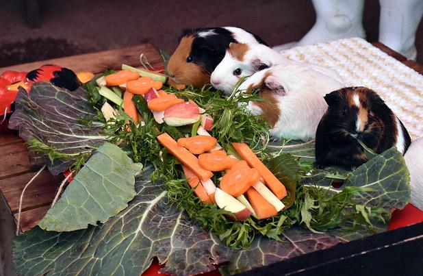 動物や野菜を食べる