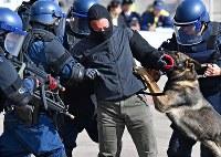 G20サミットに向けた合同訓練で、テロリスト役の男性を捕まえる警察官ら=大阪市住之江区で2019年2月5日、山崎一輝撮影
