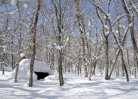 雪に覆われたアファンの森=C.W.ニコル・アファンの森財団提供