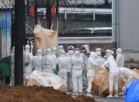 豚コレラが確認された養豚場から処分する豚を運び出す関係者ら=愛知県豊田市で2019年2月6日午後1時29分、大西岳彦撮影