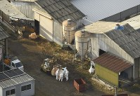 豚コレラの陽性反応が出た養豚場で防疫作業をする防護服姿の作業員=長野県宮田村で2019年2月6日午後3時32分、本社ヘリから