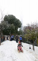 わんぱく雪まつりの会場で、山形から運ばれた雪を使ってそり遊びをする子どもたち=東京都墨田区で2019年2月9日、日報連会員の田村喜六さん撮影