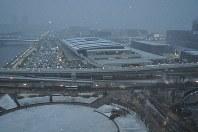 雪が積もる豊洲市場=東京都江東区で2019年2月9日、平野啓輔撮影