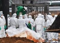 豚コレラが確認された養豚場から豚を運び出す関係者ら=愛知県豊田市で2019年2月6日午後1時4分、大西岳彦撮影