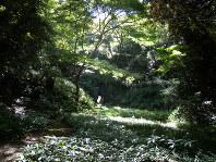 木々が茂る皇居内の吹上御苑=国立科学博物館提供