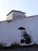 サンポートスケートパークに描かれたバンクシーの作品に似た絵=高松市で2019年2月13日午前9時38分、村松洋撮影