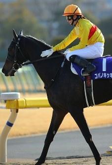 JRA所属の女性騎手として初めてとなるG1レースで5着になり、騎乗したコパノキッキングをなでる藤田菜七子騎手=東京競馬場で2019年2月17日午後3時45分、宮武祐希撮影