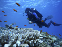 This Jan. 17, 2019 photo, provided by the Interuniversity Institute for Marine Sciences, IUI, shows corals at the institute's coral farm in the Red Sea city of Eilat, southern Israel. (Interuniversity Institute for Marine Sciences/Dror Komet via AP)