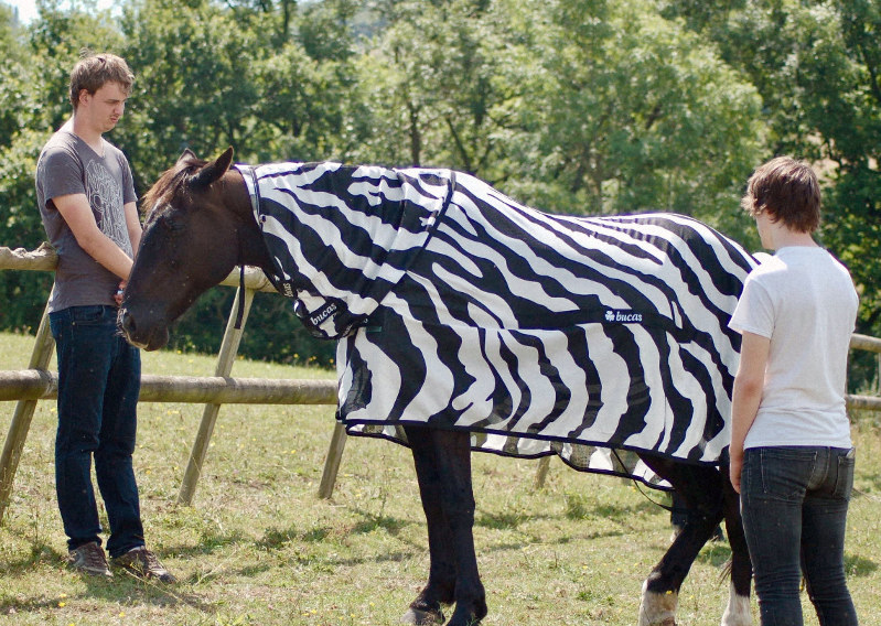 Mystery of zebra stripes solved after freakish horse costume experiment