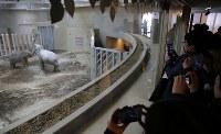 報道陣や招待者らに公開された4頭のアジアゾウが暮らす新しいゾウ舎=札幌市中央区の円山動物園で2019年2月24日、貝塚太一撮影