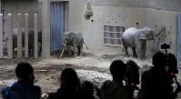 命名式で名前を名付けられて、新しいゾウ舎とともに報道陣らに公開されたアジアゾウ=札幌市中央区の円山動物園で2019年2月24日、貝塚太一撮影
