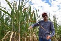 カシャッサの原料サトウキビの栽培について説明するペドロ・ルイスさん=ブラジル南東部ブラガンサパウリスタで2019年2月5日、山本太一撮影