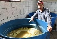 サトウキビの搾り汁の発酵具合を確認するペドロ・ルイスさん=ブラジル南東部ブラガンサパウリスタで2019年2月5日、山本太一撮影