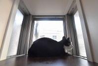 「ねこ共生専用マンション」の部屋に設けられている猫用の外見窓=福岡市早良区で2019年3月4日、徳野仁子撮影