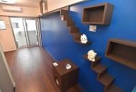 壁にキャットウオークなどが設置された「ねこ共生専用マンション」の一室。壁の色は赤と青の2タイプがある=福岡市早良区で2019年3月4日、徳野仁子撮影