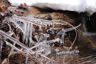 アファンの森で水路を流れ落ちる水しぶきが凍ったつらら=C.W.ニコル・アファンの森財団提供