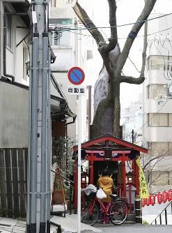 民家そばに立つエンジュ。通りがかりに手を合わせる参拝者が多い=大阪市中央区安堂寺町2で、小出洋平撮影