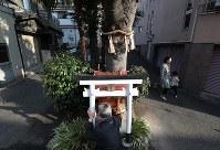エノキの間に設置されている社を清掃する藤井義隆さん。毎月1回は必ずお供えの榊を取り替えている=大阪市中央区玉造で、小出洋平撮影