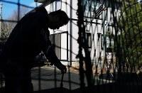 中間貯蔵施設予定地にある自宅敷地内に残された野球道具に触れる半沢佐田幸さん(55)。原発事故前までは少年野球のコーチを務め、自宅では長男(22)につきっきりで指導した。「ここは俺たち親子にとってかげがえのない場所」。ノックなどの練習をした芝生の庭には、今では植えてもいない松が生い茂っていた=福島県大熊町で2019年2月1日、喜屋武真之介撮影