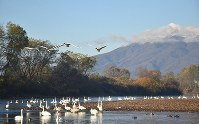 平川の後方にそびえる岩木山=青森県藤崎町で2018年11月、藤田晴雄撮影