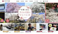 花見シーズンに向け、ウェブサイト「京都知新」(https://www.kyoto-chishin.com/)では桜の名所なども紹介=MBS提供