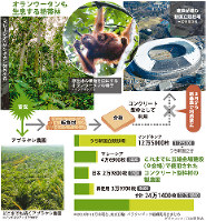 オランウータンも生息する熱帯林