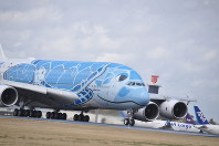 着陸した全日空のエアバスA380。ハワイのウミガメの親子をデザインしている=成田空港で2019年3月21日午後0時54分、中村宰和撮影