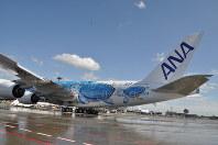 ハワイのウミガメをデザインした全日空のA380=成田空港で2019年3月21日午後1時54分、中村宰和撮影