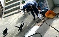 野良猫保護施設に設置された防犯カメラの映像。男が野良猫の首にひもをつけて引っ張る様子などが記録されていた=三重県鈴鹿市で3月16日、NPO法人「グリーンNet」提供(写真は動画から)
