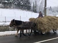 ルーマニア北西部では馬車も重要な運搬手段だ=2019年1月22日、三木幸治撮影