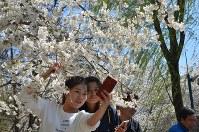 「自撮り」に夢中=北京市の玉淵潭公園で25日、浦松丈二撮影