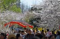 家族連れでにぎわう北京市内のサクラの名所、玉淵潭公園=25日、浦松丈二撮影