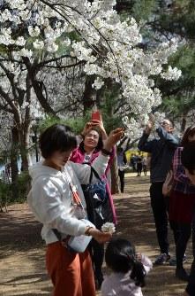 花見を楽しむ親子連れ=北京市の玉淵潭公園で25日、浦松丈二撮影