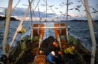 船上で日本人の同僚と魚の選別をするインドネシアの実習生たち=宮城県沖で2019年3月13日、久保玲撮影
