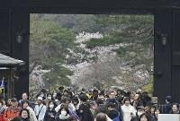 サクラが見ごろを迎え、大勢の人が訪れた皇居・乾通りの一般公開=皇居で2019年3月30日午前10時49分、藤井達也撮影