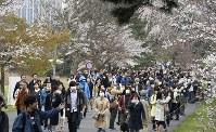 サクラが見ごろを迎え、大勢の人が訪れた皇居・乾通りの一般公開=皇居で2019年3月30日午前9時15分、藤井達也撮影
