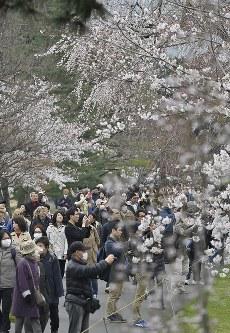 サクラが見ごろを迎え、大勢の人が訪れた皇居・乾通りの一般公開=皇居で2019年3月30日午前9時12分、藤井達也撮影
