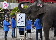 Asian elephant Yumeka is seen with her calligraphy work of the new era name
