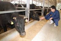 澤井牧場の牛舎で育てられている近江牛=滋賀県竜王町で2019年3月19日午後3時24分、宇都宮裕一撮影
