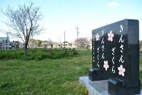 「きんさんざくら ぎんさんざくら」の記念碑と大きく育った淡墨桜(左奥)=名古屋市南区の笠寺公園で2019年4月3日16時8分、山田泰生撮影