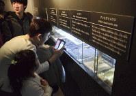 オオゲジやオオムカデなど「気持ち悪い」虫たちに見入る来場者たち=仙台市青葉区で2019年4月5日午前11時25分、遠藤大志撮影