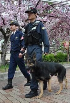 「桜の通り抜け」の会場を見回る大阪府警の警備犬=大阪市北区で2019年4月9日午前9時42分、村田拓也撮影
