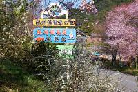 村里はどこもかしこも花盛り=和歌山県みなべ町清川で