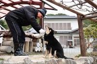 避難指示が解除された日の朝、自宅前で飼い犬フクの世話をする佐藤右吉さん(79)。避難先の同県会津若松市との間を行き来しながら帰還の準備を進めてきた。他の住人が戻ってきやすくなればと、敷地内には、菊などの花を植えてきれいに整える。まだひっそりとした町並みに「俺がいるからお茶のみに来い、と言いたいね」=福島県大熊町の大川原地区で2019年4月10日午前6時5分、渡部直樹撮影