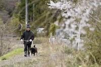 避難指示が解除された日の朝、自宅近くで散歩をする佐藤右吉さん(79)と、飼い犬のフク。避難先の同県会津若松市との間を行き来しながら帰還の準備を進めてきた。他の住人が戻ってきやすくなればと、敷地内には、菊などの花を植えてきれいに整える。まだひっそりとした町並みに「俺がいるからお茶のみに来い、と言いたいね」=福島県大熊町の大川原地区で2019年4月10日午前6時5分、渡部直樹撮影