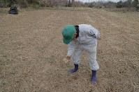 避難指示が一部解除された大熊町の大川原地区の志賀紀郎さん(79)は、避難先の田村市から約2週間ぶりに自宅を訪れた。年内には戻るつもりで準備を進めている。屋内の戸を交換し、畑の周りの草刈りなどをした。「やっぱり生まれ育ったこっちがいい。帰ってきたら畑で野菜を植えたい」と話し、除染された田で耕作の障害になる石を取り除いていた=福島県大熊町で2019年4月10日午前11時17分、和田大典撮影