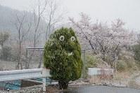 午前0時に避難指示が一部解除され、正午ごろから降り出した雨が雪に変わった大熊町の大川原地区=福島県大熊町で2019年4月10日午後5時28分、和田大典撮影