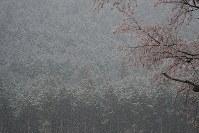 午前0時に避難指示が一部解除され、正午ごろから降り出した雨が雪に変わった大熊町の大川原地区=福島県大熊町で2019年4月10日午後5時23分、和田大典撮影