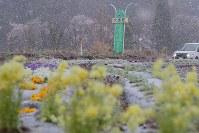 午前0時に避難指示が一部解除され、正午ごろから降り出した雨が雪に変わった大熊町の大川原地区=福島県大熊町で2019年4月10日午後5時4分、和田大典撮影